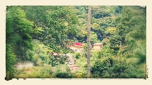 Olha nosso telhadão vermelhão no meio do Mato.