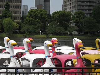 swan boats of ueno park