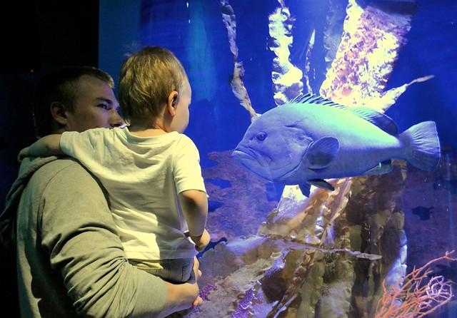 SeaLife (32)muok