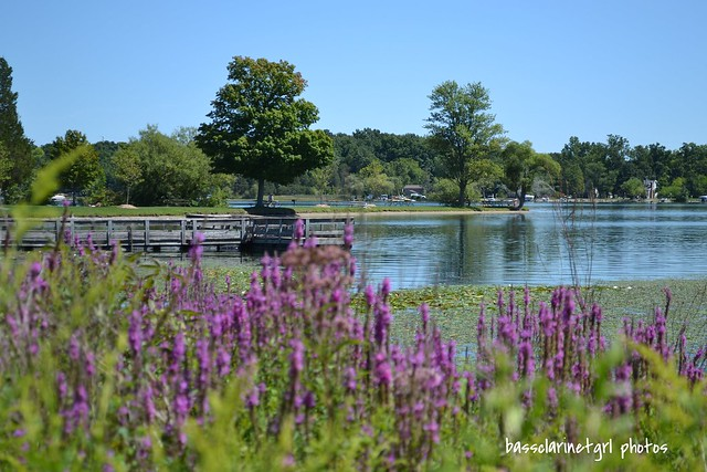 Flowers by Lake