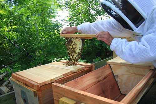 Bee transfer