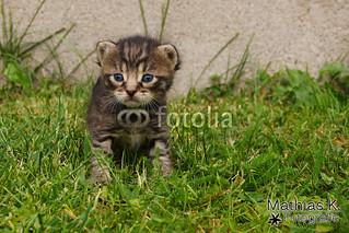 Katzenbaby ♥
