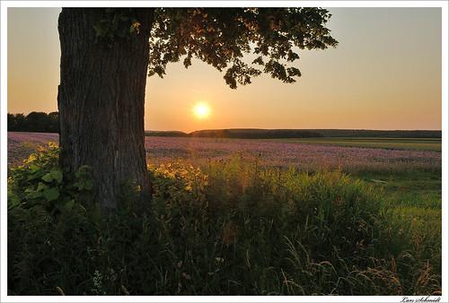 sunset sky sun tree nature landscape sonnenuntergang natur himmel landschaft sonne baum eichsfeld tamron1024mmf3545spdiiildaslif