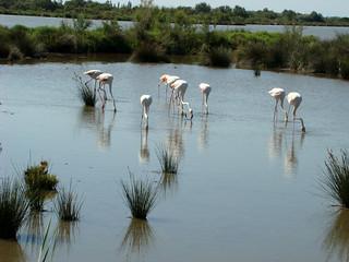 123 flamingo's