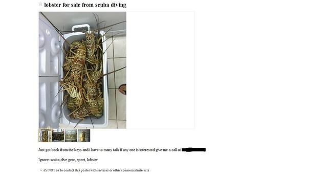 40 lobster for sale craigslist ad flickr photo sharing for Fish house for sale craigslist
