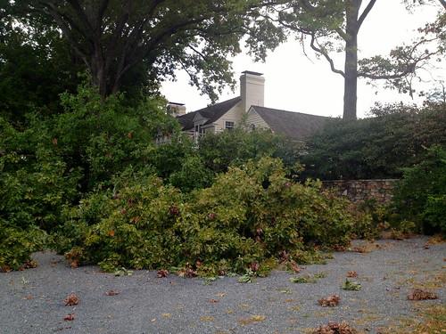 Big oak tree broken branch