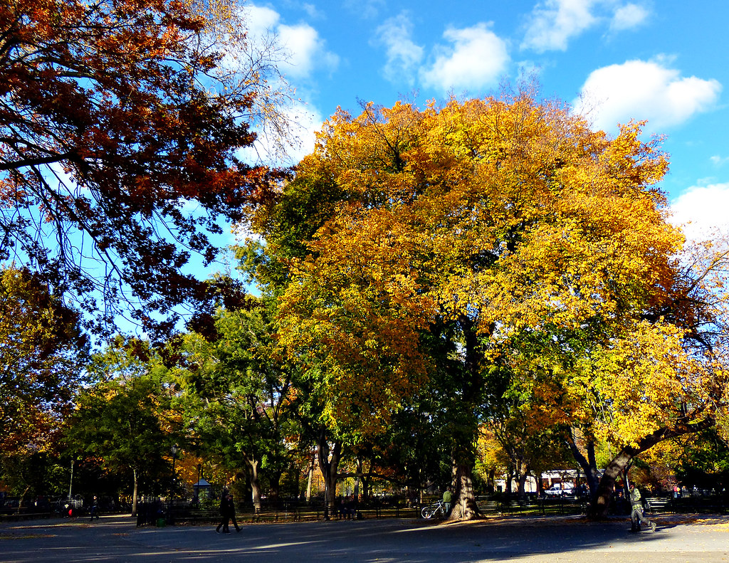 Fall in Tompkins Square
