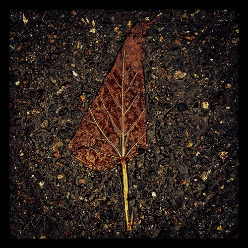 leafnowind by Nature Morte