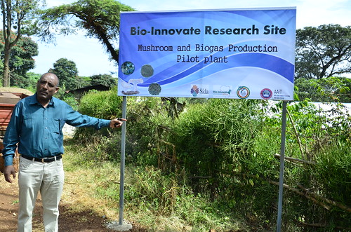 Dr Berhanu Assefa at his project site