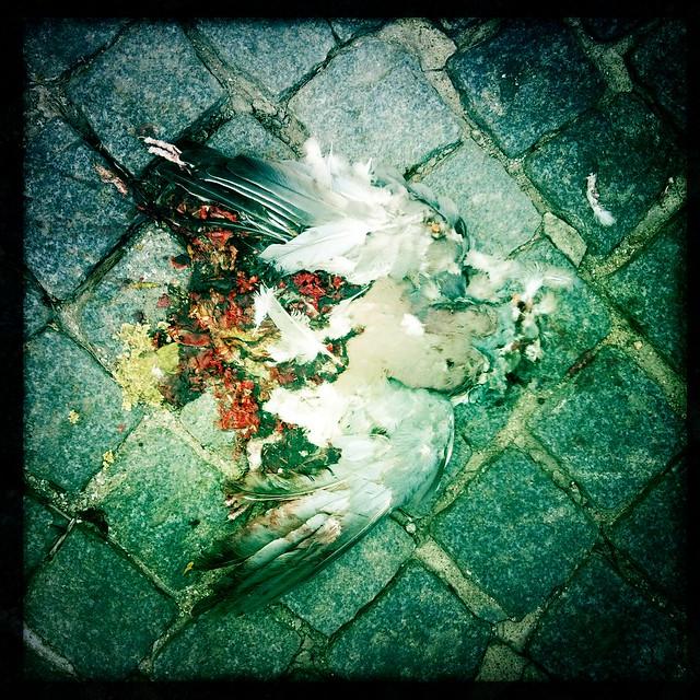 roadkill@bad_doberan