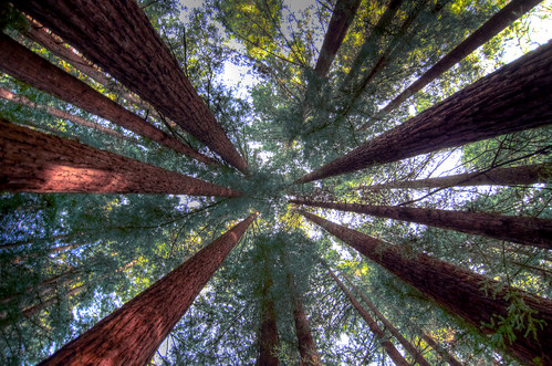 Humboldt Redwood Forest Single_tonemapped