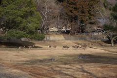 奈良 Nara Japan