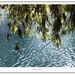 Hojas y laguna por Alfonso LC