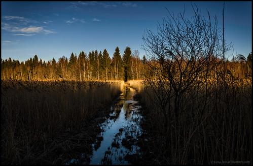 wet water grass sunshine forest reeds hiking led trail skog vatten hdr vandring gräs vass solsken 7ex vått bergö vandringsled