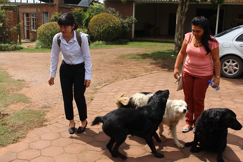 Yumi and Bhairavi meet some of the dogs