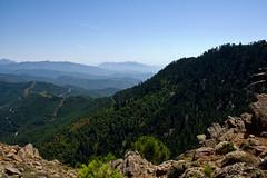Bosques mixtos de pinos resineros y pinsapos desde el Cerro del Castellón