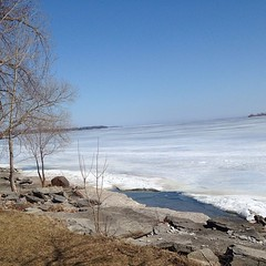 Felt a little bad for the seagulls we saw out on the lake today. #ice #lakeontario #spring