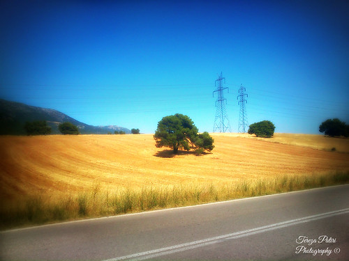 road trip travel trees light summer vacation sky art field yellow landscape photography gold photo spring day searchthebest hellas roadtrip athens greece grecia pictureperfect 2014 naturesfinest attiki location4 希腊 ελλάδα 100faves 50faves 100favs αθήνα anawesomeshot flickrdiamond theperfectphotographer