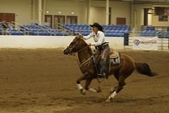 animal sports, rodeo, equestrianism, western riding, team penning, mare, stallion, equestrian sport, sports, western pleasure, charreada, reining, horse, barrel racing,