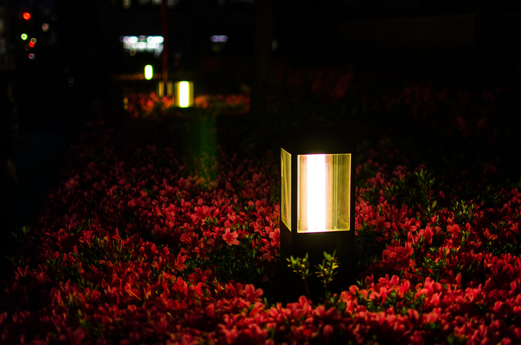 Flower_in_the_Night