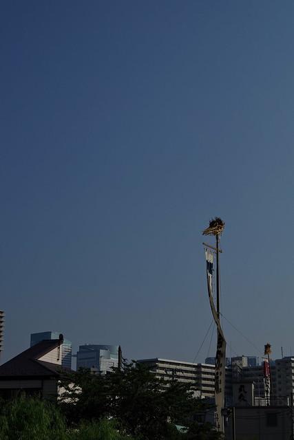 Tsukuda-Sumiyoshi Shrine Festival 2015 32