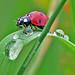 I love the nature....... by betuwefotograaf