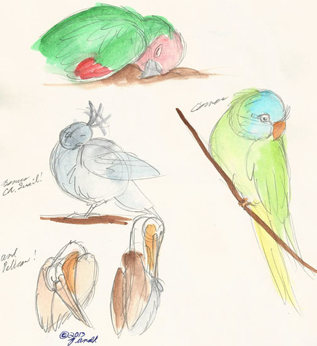 "6.19.13 - ""The Wild Parrots of Telegraph Hill"" Sketches"