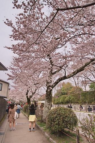 【写真】2013 桜 : 哲学の道/2018-12-24/IMGP9201