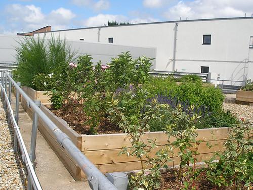 Princesshay roof garden