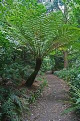 Dicksomiaceae
