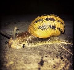 Joli escargot