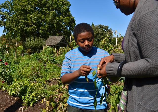 Participants showed their families the plants they had been growing since July. Photo by Blanca Begert.