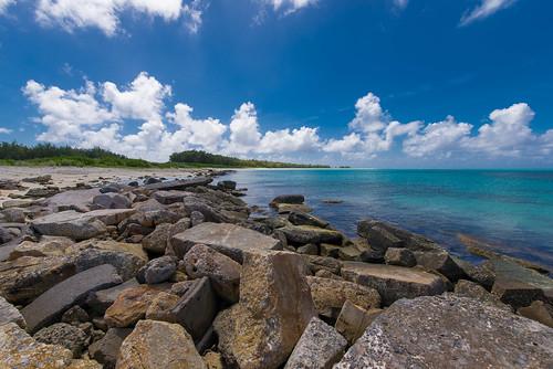 beach island hawaii northwest midway atoll monkseal