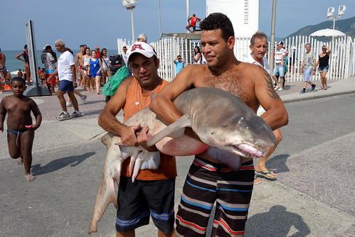 O tubarão do Recreio dos Bandeirantes. by pqueirozribeiro