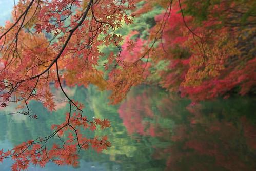 Autumn Lake Inagako