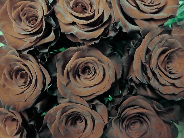 Roses (2013)