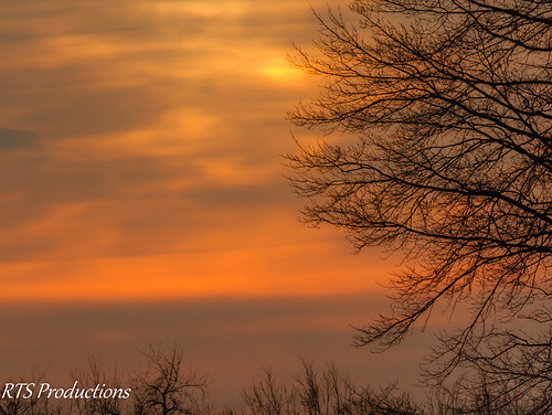 wood morning trees winter sky tree nature clouds canon outdoors dawn morninglight day cloudy overcast 7d orangesky cloudysky buschwildlife canon300mmf4l canon7d