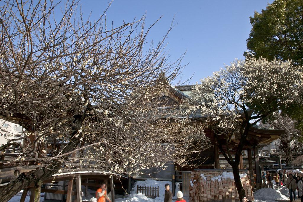 湯島天滿宮7