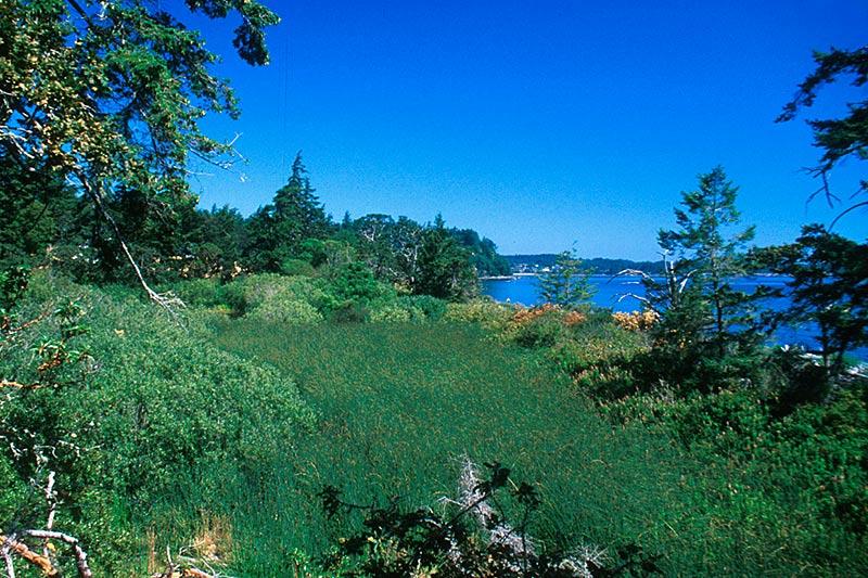 Devonian Park, Metchosin, Victoria, Vancouver Island, British Columbia, Canada