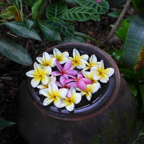 garden australia brisbane sunnybank tropicalesque tropicallandscaping balinesestyle tropicalstylegarden hundschiedt