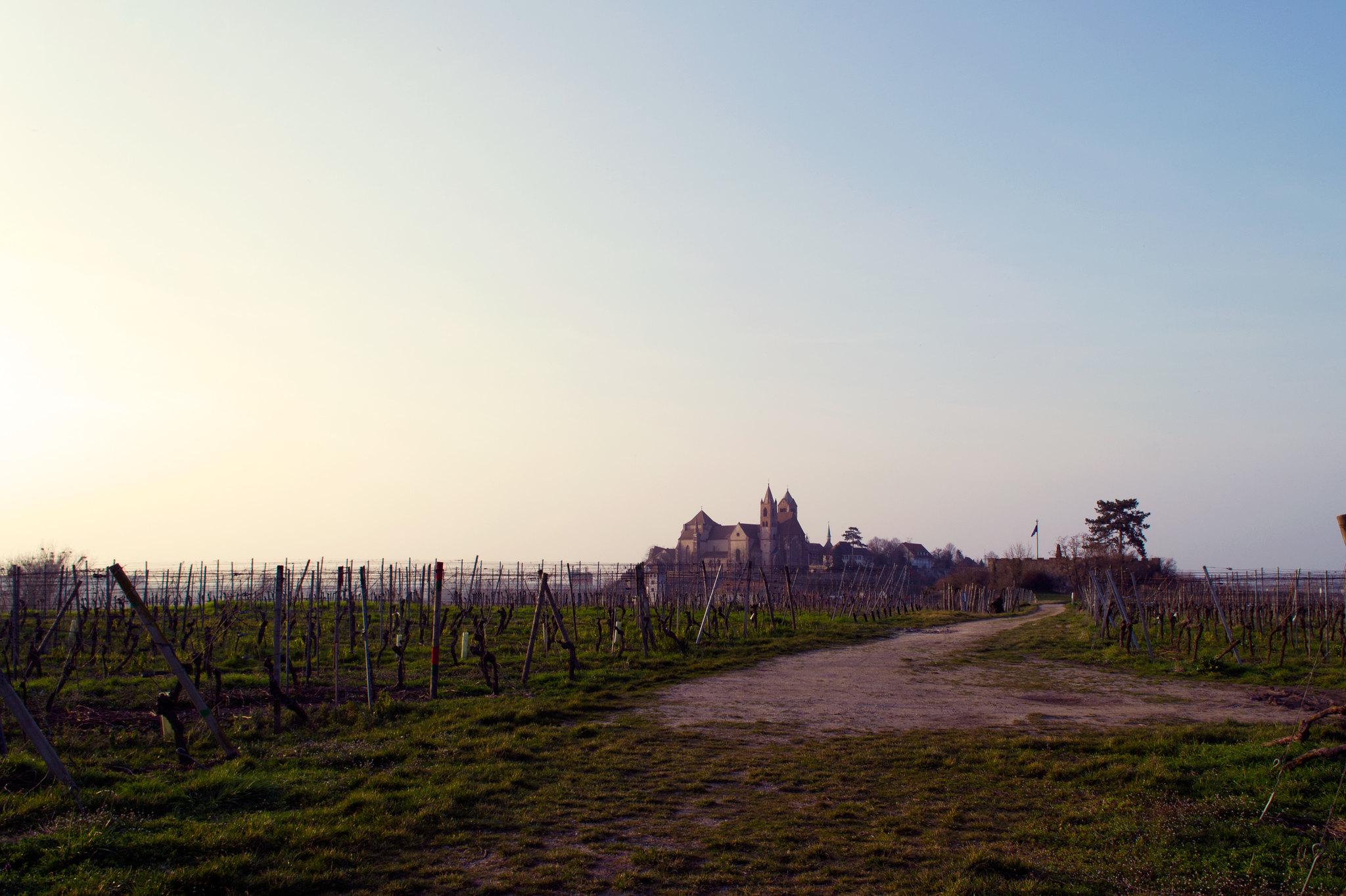 Vom Eckartsberg ist selbst das Stephansmünster fern. Bildbeschreibung: Es ist früher Frühling auf einem Hügel, die Sonne ist nicht zu sehen, scheint aber von links auf die Szenerie. In der rechten Bildhälfte geht ein Weg in die Ferne, links und rechts von ihm stehen noch keine Weinstöcke auf einem dünnen, leicht grünen Boden. Im Hintergrund ragt auf einem Berg eine romanische Kathedrale, das Stephansmünster zu Breisach auf.