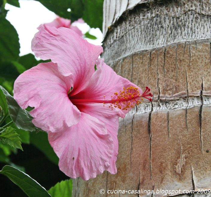 Hibiscusbluete mit Palme