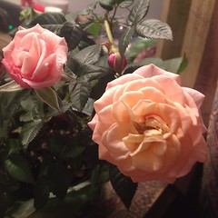 Bedside rose pot. #prettythings, #makesmehappy