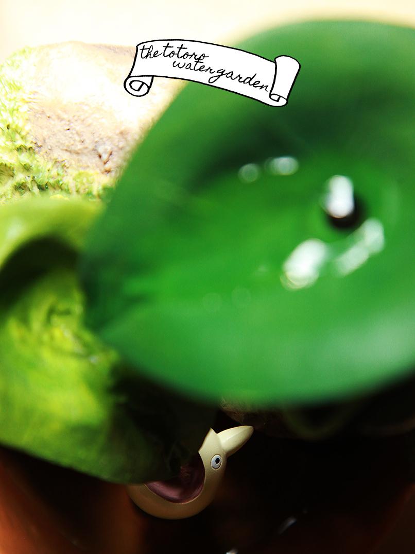 totoro water garden 1