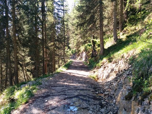 Gemütlich geht's durch den Wald