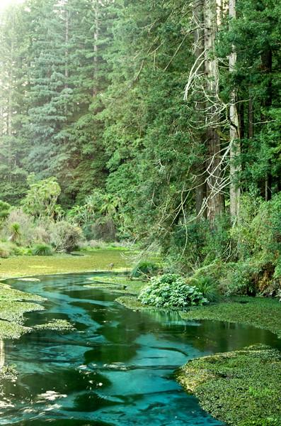 K52883 Hamurana Springs & Redwoods view 8 6 13 - 600j