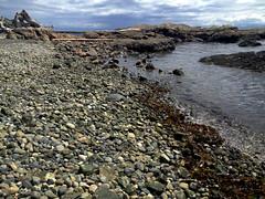 rocky beach & driftwood, victoria
