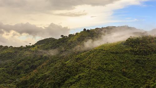 puertorico orocovis morovis