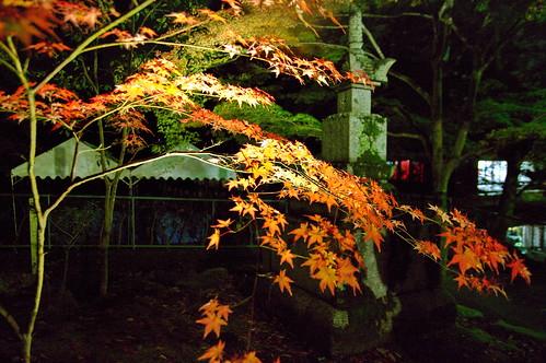 【写真】2012 紅葉 : 永観堂/2020-05-30/IMGP6264