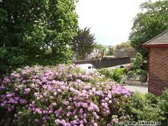 7. niste flori roz asemanatoare liliacului